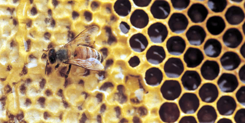 """""""Better"""" Bees or Better Monitoring?"""