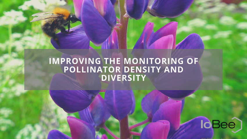 Improving the Monitoring of Pollinator Density and Diversity