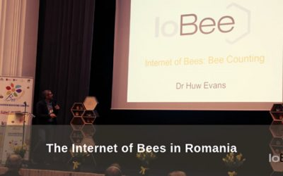 The Internet of Bees in Romania