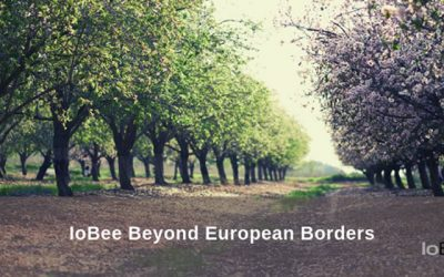 IoBee Beyond European borders