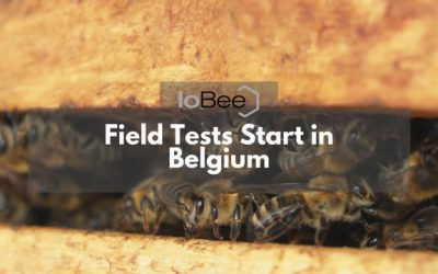 IoBee Field Tests Start in Belgium